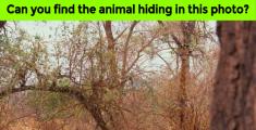 animal-find