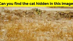 cat-hidden