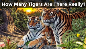 how-many-tigers