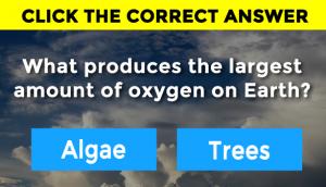 tree-algae