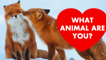 animal-are-you