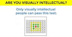 visually-intelectual