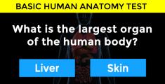 organ-