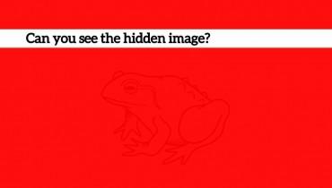 hidden-image