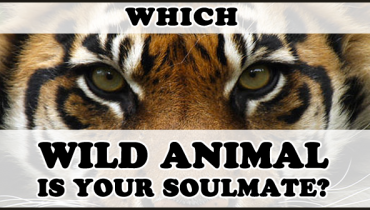 wild-animal-soulmate
